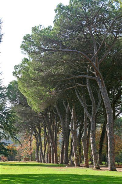 Latium Countryside
